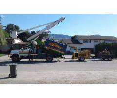 Established Tree Service for Sale