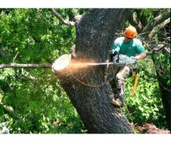 Established Tree Service Company
